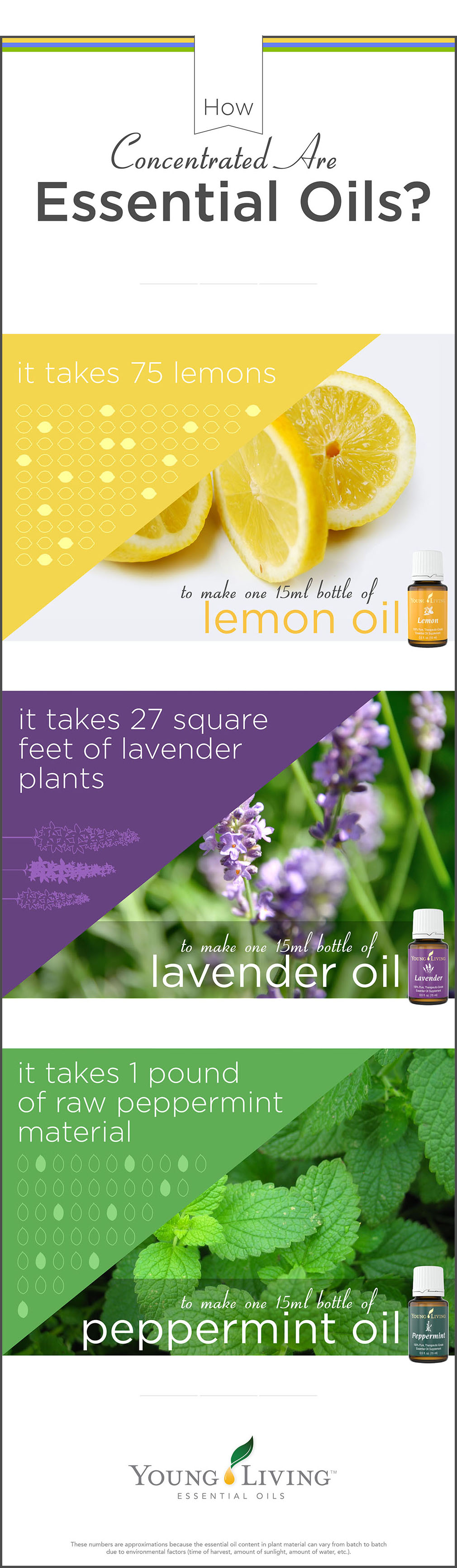 what is in an essential oil