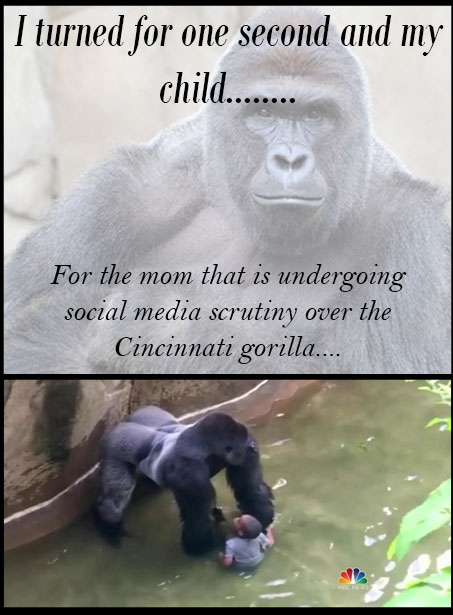 gorilla shot in cincinnatti i turned for one second and my child